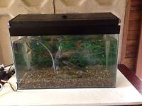 Fish Tank & Fish included