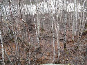 terrains boisés sur le bord du Saguenay a Shipshaw Saguenay Saguenay-Lac-Saint-Jean image 7
