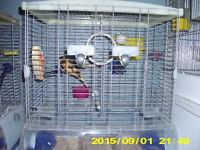 cage vision et 2 serin un blanc et l autre jaune et brun