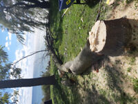 Linton Landscaping Tree Removal Service