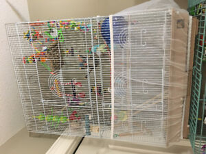 Budgies with cage and ALL supplies
