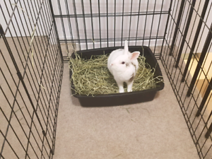 Bunny looking for a new home