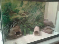 2 Leopard Geckos; LOTS INCLUDED! *Need Gone ASAP*