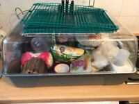Dwarf hamster set up