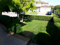 Student wanted for lawncare...call James at 416-606-4986