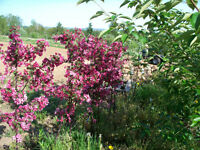 Fruit Trees Available October 2015 & April-May 2016
