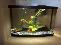 Two new fish tanks, accessories and about 50 wagtail platys