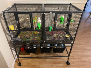 Yellow canaries, cage, food and supplies.