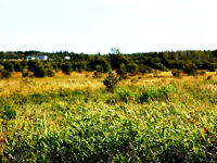 SPECIAL & affordable land !!!