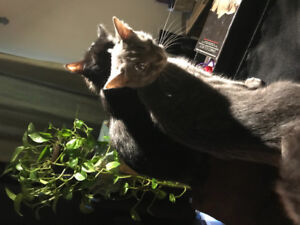 Looking to Rehome My Cats