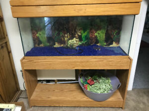 Large Fish Aquarium