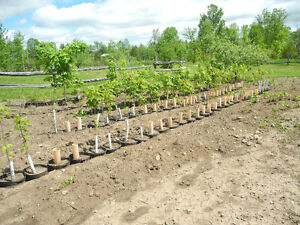Certified nursery started trees and shrubs