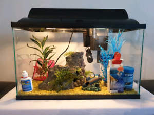 10 Gallons fish tank with accessories