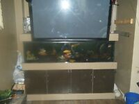 100g Complete fish tank set up!!!