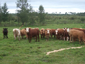 15,000 Acres of Farm Land Available for Lease