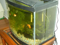 Fish tank for sale  Digital thermometer, lid, lamp