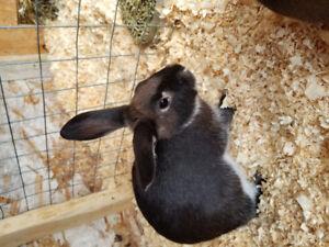 Selling 4 bunnys