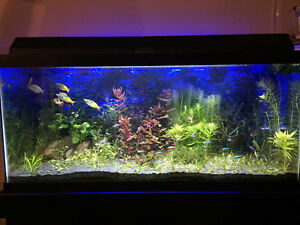 Aquarium Tank (40gal) and wood stand for sale