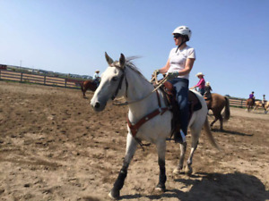 10 year old grade Mare