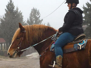 Beautiful Belgian Riding and Driving Mare