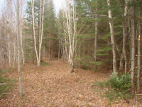 200 ACRES ON CANAAN RIVER, COLES ISLAND, NB