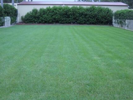 TURF*High Quality Turf*Soft leaf Buffalo & Kikuyu*Premium Lawn* Vineyard Hawkesbury Area Preview