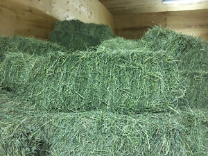 Hay for sale SOLD OUT thank you ask about our second cut