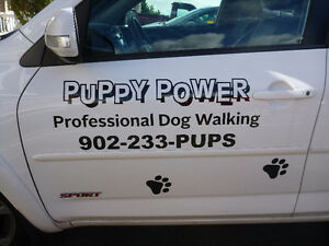 Puppy Power Professional Dog Walking