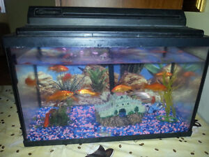 Fish tank with 6 gold fish and all accesorry included