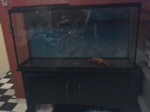 60 gallon fish tank