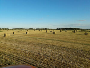 Dry Green feed bales for sale.