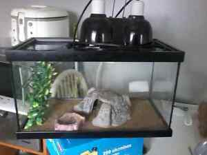 Gecko/reptile tank and accessories