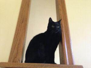 MISSING: Black Female Cat in Riverview Area