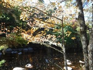 Picturesque Woodlot with River Frontage