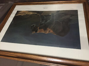 Various wildlife frame prints - Ducks unlimited collections