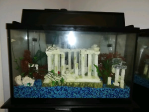 35g Fish Tank (Everything included)