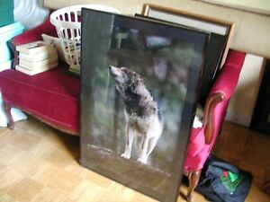 Large Wolf picture