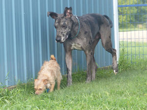 Pet Boarding and Daycare: Paws Claws N' Tails Moose Jaw Regina Area image 6