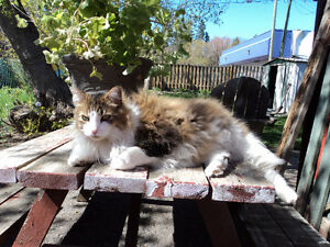 Loving cat needs a new home