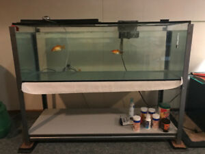 55 gal with steel stand.,aquarium/fish