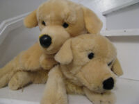 Plush Golden Retriever Puppies