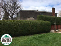 Cedar Hedge Trimming - Best Prices for Beautiful Results!