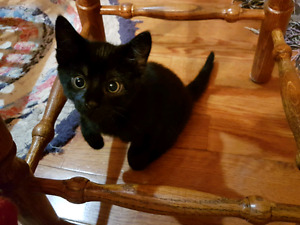 8 wk kittens looking for a good loving home!