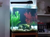 Aqua one aspire 55ltr and stand