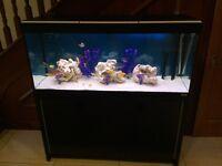 Fluval Roma 240 fish tank