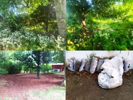 Reclaim overgrown areas. Gardener available. Flexible