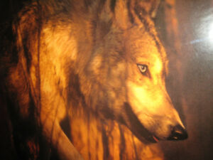 WOLF SPIRIT OF THE SACRED FOREST
