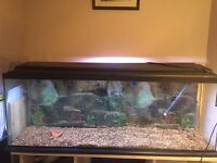 4ft fish tank for sale £75