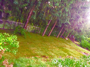 ANYTHING OUTDOORS ~ Landscaping & Property maintenance Services Cambridge Kitchener Area image 8