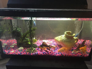 Gold fish, cleaner Fish and tank